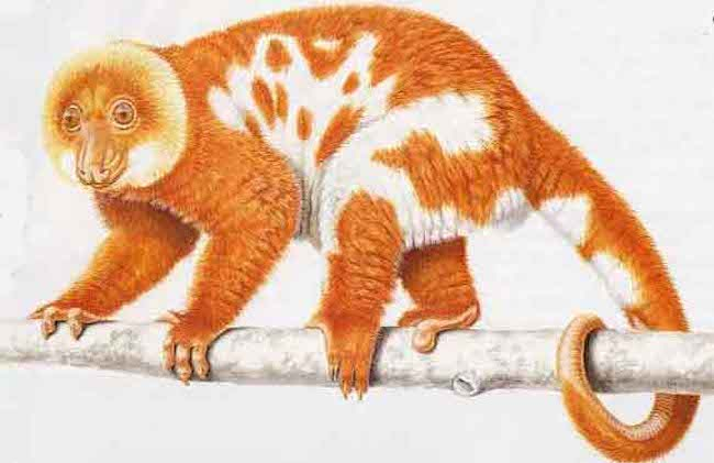 spotted-cuscus.jpg