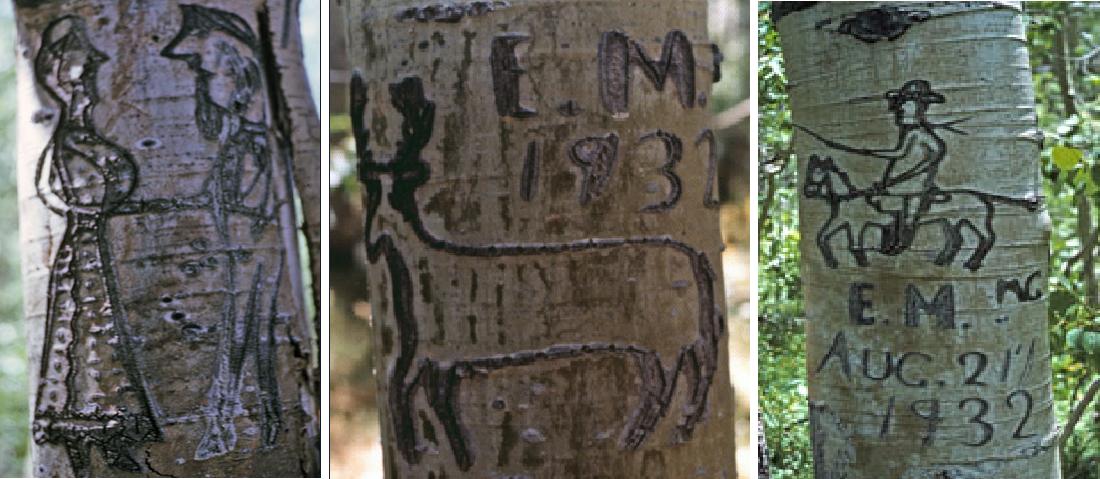 arbolglyphs.png